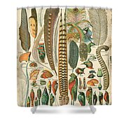 Feather Plumes-a Shower Curtain