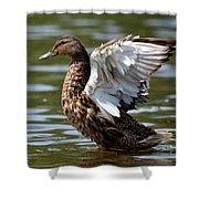 Feather Spread - Female Mallard Shower Curtain