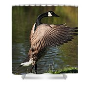 Feather Wash Shower Curtain