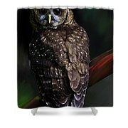 Feathered Beauty Shower Curtain