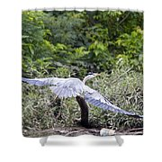 Feathering Flight Shower Curtain