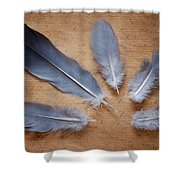 Feathers And Old Letter Shower Curtain