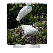 Feathers In A Twist Shower Curtain