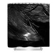 Feathers In Black And White Shower Curtain