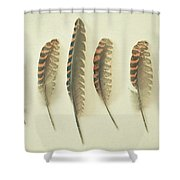 Feathers No2 Shower Curtain