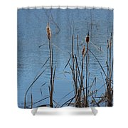 February Cattails Shower Curtain