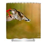 Feeding Anna's Hummingbird Shower Curtain