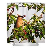 Feeding Cedar Waxwing Shower Curtain