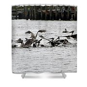 Feeding Frenzy Shower Curtain