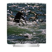 Feeding Humpback Whale Shower Curtain