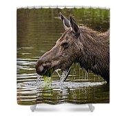 Feeding Moose Shower Curtain