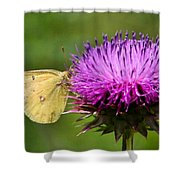 Feeding On Thistle Shower Curtain