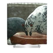 Feeding Pigeons Shower Curtain