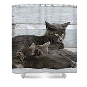Feeding The Kittens Shower Curtain