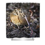 Feeding Woodcock Shower Curtain