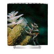 Feeding Worms Shower Curtain