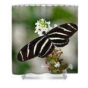 Feeding Zebra Butterfly Shower Curtain