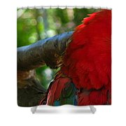 Feeling A Little Red Shower Curtain