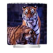 Feline Love Shower Curtain