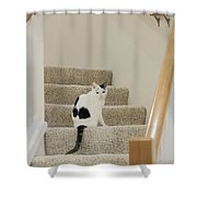 Feline On Stairs Shower Curtain