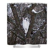 Felis Silvestris Catus In Winter Shower Curtain