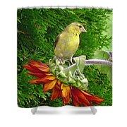 Female American Goldfinch Shower Curtain