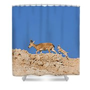 female and young Nubian Ibex Shower Curtain