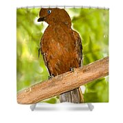 Female Andean Cock-of-the-rock Shower Curtain