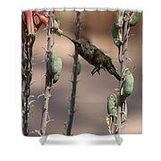 Female Anna's Hummingbird Shower Curtain