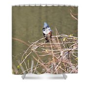 Female Belted Kingfisher Shower Curtain