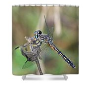 Female Blue Dasher In July  Shower Curtain