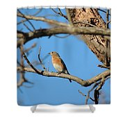 Female Bluebird Shower Curtain