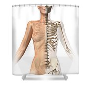 Female Body With Bone Skeleton Shower Curtain