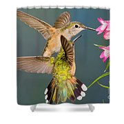 Female Broad-tailed Hummingbird Shower Curtain