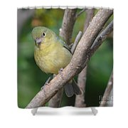 Female Bunting  Shower Curtain