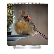 Female Cardinal Shower Curtain