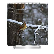 Female Cardinal In Snow Shower Curtain