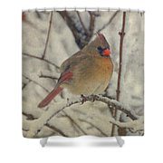 Female Cardinal In The Snow II Shower Curtain