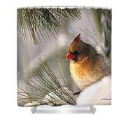 Female Cardinal Nestled In Snow Shower Curtain