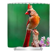 Female Cardinal Posing Pretty  Shower Curtain