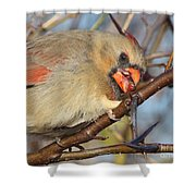 Thorns And Berries - Cardinal Shower Curtain