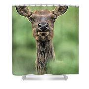 Female Elk Portrait Yellowstone National Park Wyoming Shower Curtain