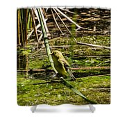 Female Gold Finch Drinking Shower Curtain
