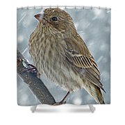 Female House Finch In Snow 1 Shower Curtain