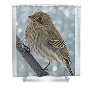 Female House Finch In Snow Shower Curtain