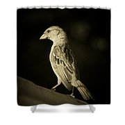 Female House Finch Shower Curtain
