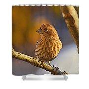Female Housefinch Shower Curtain
