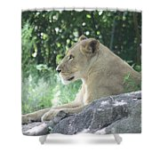 Female Lion On Guard Shower Curtain