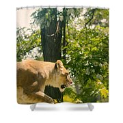 Female Lion On The Move Shower Curtain