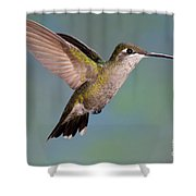 Female Magnificent Hummingbird At Flower Shower Curtain